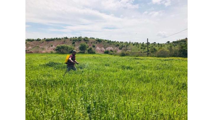 Dİyarbakır'da yağışlardan etkilenen çiftçi sırt pompasıyla ilaçlama yaptı