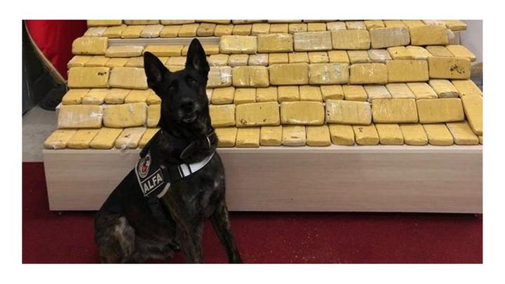 Van'da narkotik köpeği Alfa, pul biber ile kamufle edilmiş eroini buldu