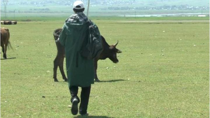 Muş'ta üniversiteli çoban,  KPSS'ye hazırlanıyor