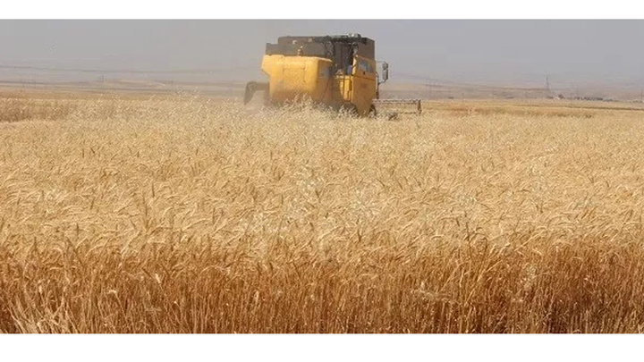 Kozan'da buğday sezonu başladı