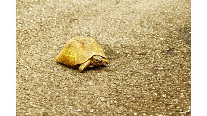Yüksekova'da bir öğretmen yılan yiyen kaplumbağayı görüntüledi