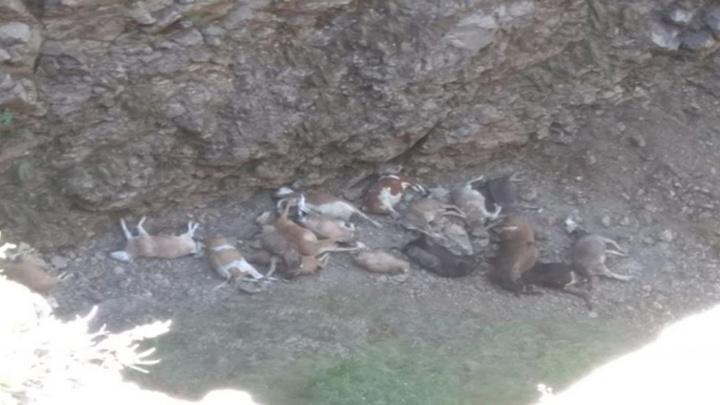 Erzurum'da doludan kaçan büyükbaş hayvanlar uçurumdan düşerek telef oldu