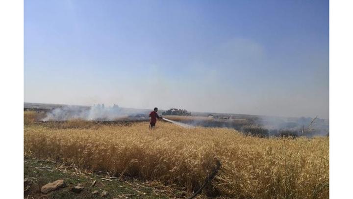 Ceylanpınar'da 40 dönüm buğday tarlası kül oldu