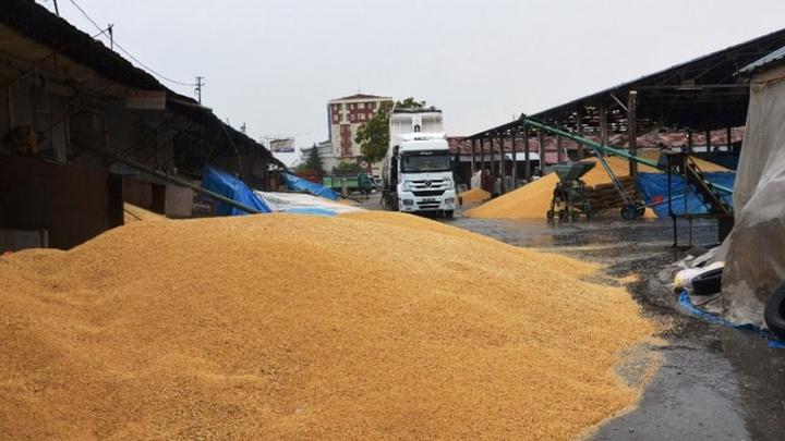 Malatya'da buğday pazarında bulunan tonlarca hububat yağmurda ıslandı; çiftçi de tüccar da  mağdur