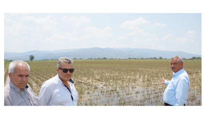 Aydın'da pamuk eken çiftçiler 30 bin dönüm alanda 40 milyon lira zararda