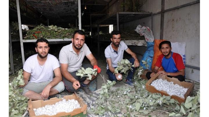 Batman'da atanamayan gençler ipek böceği işine girdiler, aylık 20 bin lira kazanıyorlar