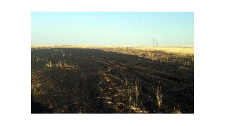 Siverek'te 20 dönüm buğday tarlası, güvercinin elektrik tellerine takılmasıyla kül oldu