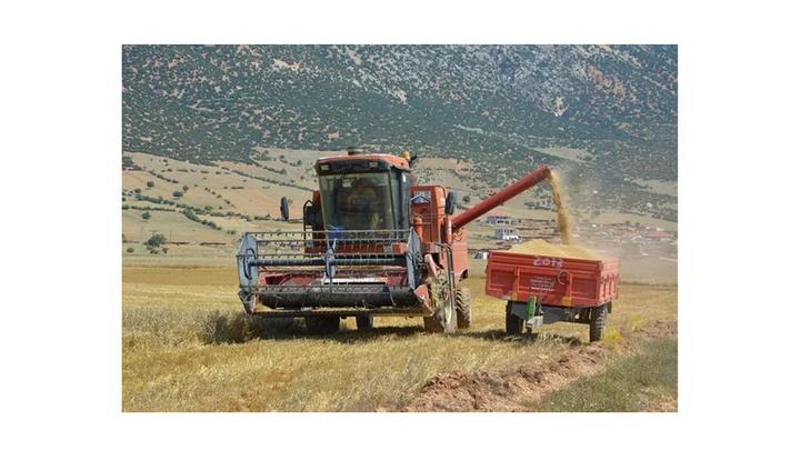 Korkuteli'nde buğday hasadı başladı