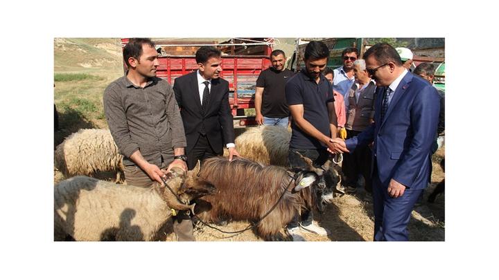 Hakkari'de 47 aileye 987 küçükbaş hayvan dağıtıldı