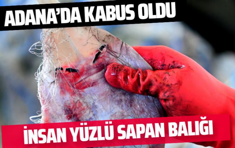 Adana'da hızla yayılıyor insan yüzlü sapan balığı kabus oldu