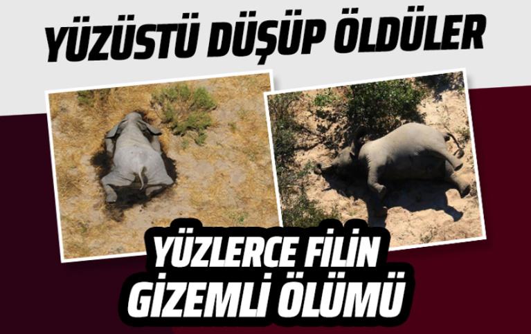 Bostvana'da yüzlerce fil gizemli bir şekilde öldü