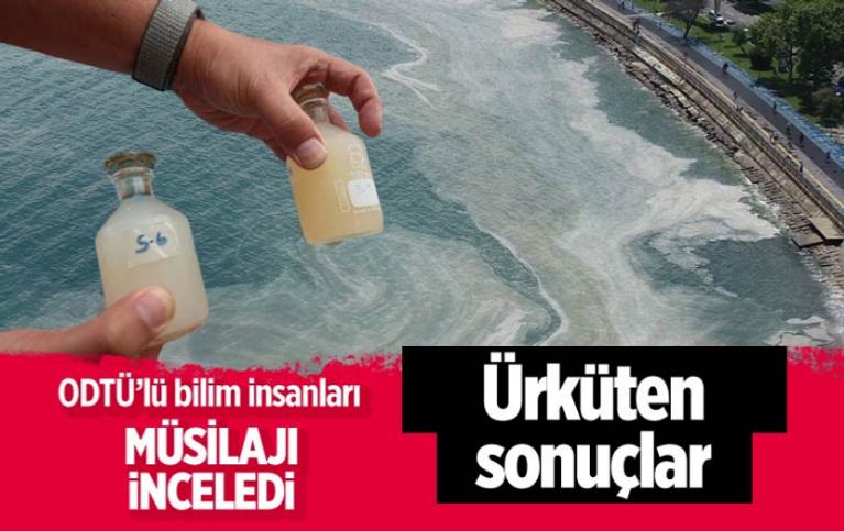 ODTÜ Marmara'da müsijajı inceledi müsilaj üzerinde yapılan ürküten sonuçlar çıktı