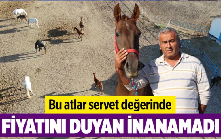 Servet değerinde! Eskişehir'de bu atların fiyatını duyan inanamadı: Sabır işi